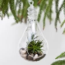 plant terrariums for sale shop terrarium kits for plants online