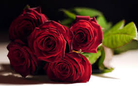 wallpaper flower red rose flowers red rose wallpapers desktop phone tablet awesome