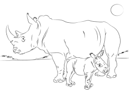 mammals coloring pages rhino coloring pages free coloring pages