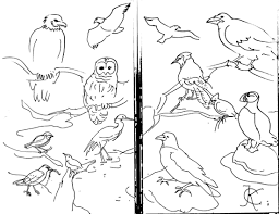 coloring pages of animals that migrate animal mechanicals coloring pages luxury animal migration coloring