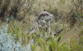 Ghillie Suit Halloween Costume Military Ghillie Suit Ghillie Suit Market 1 Ghillie Suit