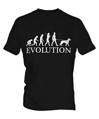 belgian malinois size at 6 months belgian malinois evolution of man mens t shirt tee top dog gift