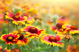 the flowers of summer at 10 best flowers to plant in the summer taskeasy