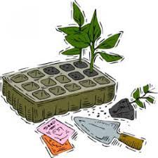 transplanting seeds seedlings garden vegetable the old farmer u0027s