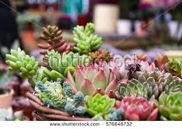 Rectangular Succulent Planter by Rectangular Arrangement Succulents Cactus Succulents Planter Stock