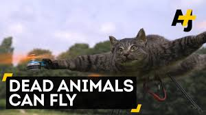 cat drone youtube