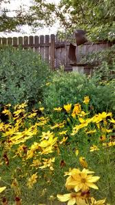 colorado native plants list 105 best native plants trees shrubs new york and north eastern