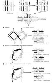 a short history and description of drosophila melanogaster