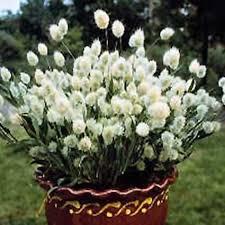 11 best flower arrangements images on flower