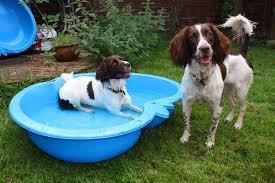 affenpinscher a vendre quebec affenpinscher as good as it gets how to choose the best dog