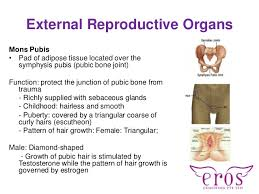 hairless pubis physiology of female and male sexuality