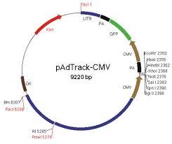 Map Pad Addgene Padtrack Cmv