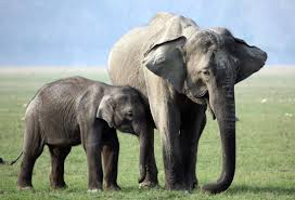 who we are elephant family