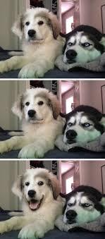 Dog Jokes Meme - dog jokes blank template imgflip
