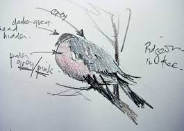 what you need to draw and paint birds