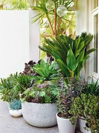 succulent and tropical potted plants landscaping stunning potted