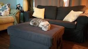 misbehaving cats don u0027t need timeouts i swayed my spouse catster