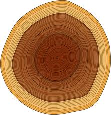 wood tree rings images Annual rings trunk tree free vector graphic on pixabay png