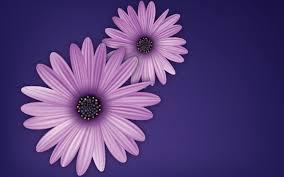 floral texture gradient graphics pattern vectors walldevil