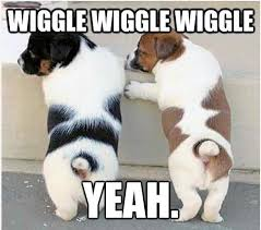 Cute Dog Memes - wiggle wiggle humordog funny dog pictures funny dog memes