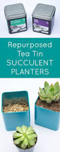 diy tin succulent planters the inspired hive