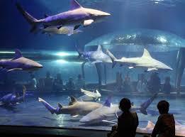 aquarium oklahoma aquarium u2013 jenks chamber of commerce