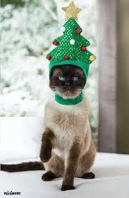 Cat Climbing Christmas Tree Video 757 Best U003d U003d Cats Love Christmas Too U003d U003d Images On Pinterest