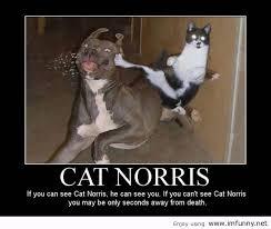 Cute Funny Cat Memes - cat norris cat meme cat planet cat planet