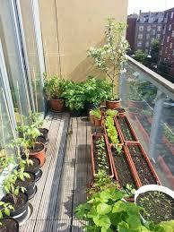 download patio gardening solidaria garden
