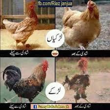 Rooster Jokes Meme - funny urdu jokes pk added a new photo funny urdu jokes pk facebook