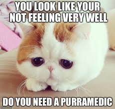 Feeling Sad Meme - sad cat imgflip