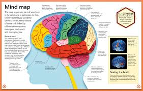 map of the brain brain map braim brainmaphtm