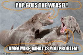 Weasel Meme - image tagged in funny dogs imgflip