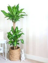 home decor india online decorations artificial plants for home decor online home decor