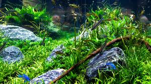 aquarium decorating tips youtube