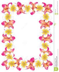 hawaiian flower clipart border clipartxtras