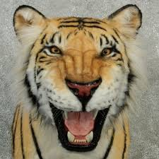 reproduction bengal tiger shoulder mount 12900 the taxidermy store