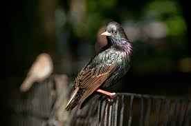 frequently asked questions about birds celebrate urban birds