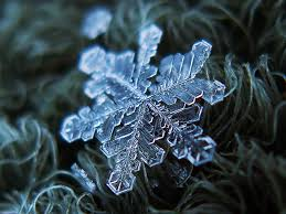 snowflake snowflake macro shot january 2009 background u2026 flickr