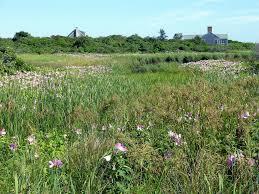 native plants for wildlife habitat and conservation landscaping rose mallow chesapeake bay program