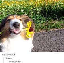 Flower Meme - image about flower in animal memes by what matters most to you
