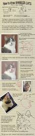 Anatomy Of A Cats Eye Cat Anatomy And Tutorials On Catlovers United Deviantart