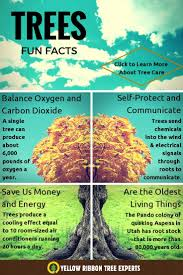image result for did you tree facts motivational quotes