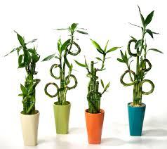 most popular houseplants costa farms green flowering house plants