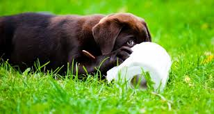 housebreaking puppy u0027s don u0027ts cesar u0027s