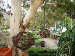 native plant nurseries melbourne the best nurseries to buy plants in melbourne