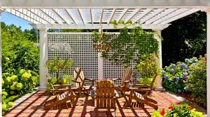 climbing plants for balcony and patio privacy youtube