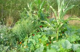 Permaculture Vegetable Garden Layout Synergistic Growing Permaculture Magazine
