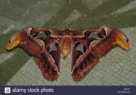 giant orange colored moth stock photo royalty free image 44159 stock photo giant orange colored moth
