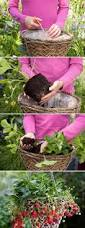 creative diy ideas for growing strawberries on small garden or